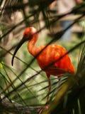 Orange Vogel im Baum Lizenzfreies Stockfoto