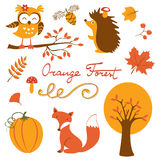 Orange Wald-colurful Sammlung Lizenzfreies Stockbild