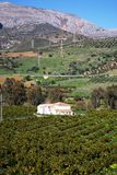 Orange Waldung im Tal, Andalusien, Spanien. Lizenzfreie Stockbilder