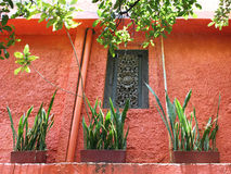 Orange Wall with Greens. An old wall painted bright orange with green plants and tree leaves Stock Photos