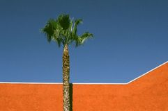 Orange Wall and Palm. A classic yet cold view of Los Angeles reduced to an abstract Royalty Free Stock Images