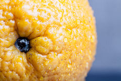 Orange with water drops on the skin close-up on a light backgrou Stock Images