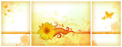 Orange watercolor backgrounds. With watercolor sunflower Stock Image