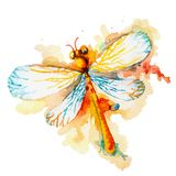 Orange Watercolor Dragonfly Royalty Free Stock Photography