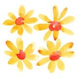 Orange watercolor flowers Stock Photography