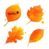 Orange watercolor leaves vector set Stock Photos
