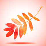 Orange watercolor painted rowan tree leaf Stock Photography