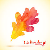 Orange watercolor painted vector oak leaf Stock Image