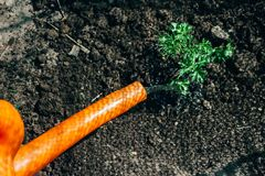 Orange watering can plant. care. Orange watering can plant. shadow from the net. plant the plants on the farm. farming and breeding. hobby stock photo