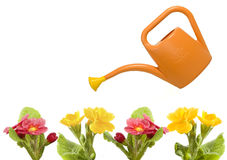 Orange watering and red primrose Royalty Free Stock Photography