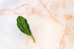 Orange weiße Marmorbeschaffenheit mit kleinem grünem Blatt-Hintergrund Stockfotografie