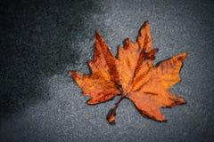 Orange wet autumn maple tree leaf leave on the background. Orange wet autumn leave on the background Stock Photo