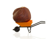 Orange wheelbarrow (miniature) with a hazelnut in it Royalty Free Stock Images