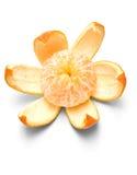 Orange on white background Stock Photos