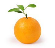 Orange on white background Royalty Free Stock Images