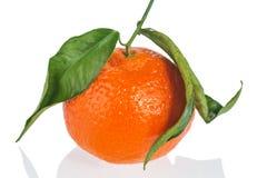 Orange on white background Stock Images