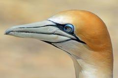 Orange White Bird Royalty Free Stock Photo
