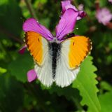 Orange white butterfly. Plant purple flower green natural closeup royalty free stock photography