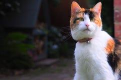 Orange and white cat Stock Image