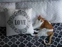 Orange and White Cat next to LOVE. Pillow royalty free stock images