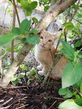 Orange and white cat. With brown eyes royalty free stock photography