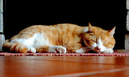 Orange and white cat sleeping. Over red carpet Royalty Free Stock Images