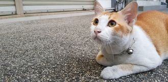 Wondering orange and white cat lays down on the street and gazing something. Orange and white colour cat lays down on the street and gazing on something stock photography