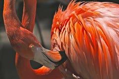Orange and White Feathered Bird Royalty Free Stock Photos