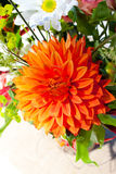 Orange and White Flowers Royalty Free Stock Photography
