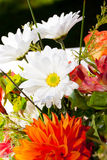 Orange and White Flowers Stock Images