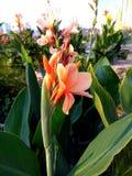 Orange flowers in the garden stock photo