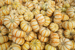 Orange and white gourds. Harvested and piled up at local farm Royalty Free Stock Image