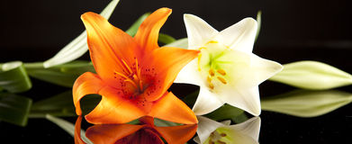 Orange and white lilies. On a reflective surface against a black background Stock Images