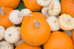 Orange and White Pumpkins Royalty Free Stock Image