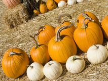 Orange and White Pumpkins Royalty Free Stock Photo