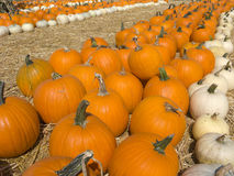 Orange and White Pumpkins Stock Photography