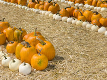 Orange and White Pumpkins Stock Images