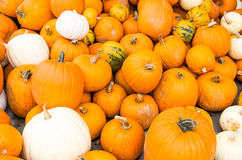 Orange and white pumpkins on display Stock Images