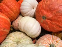 Orange and white pumpkins and gourds Royalty Free Stock Image