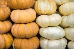 Orange and white pumpkins for sale; seasonal display; background for fall, autumn; Halloween, Thanksgiving, California, California royalty free stock photos