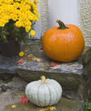 Orange and white pumpkins yellow mums on porch. Bright orange pumpkin and yellow mums in basket by window selective DOF for Halloween Thanksgiving stock photos