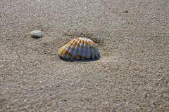 Orange and white seashell tucked into the sand. On a sunny day royalty free stock image