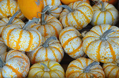 Orange and white striped pumpkins Stock Photography
