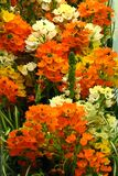 orange, white, and yellow flowers Stock Images