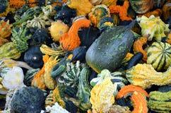 Fall Gourds Royalty Free Stock Photos