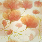 Orange wild roses in the morning dew Stock Image