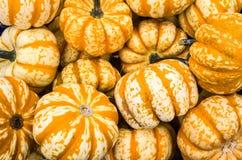 Orange winter squash on display Stock Image