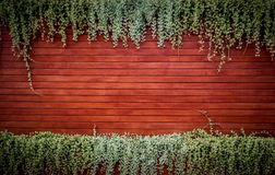 Orange woodden wall with foliage Stock Image