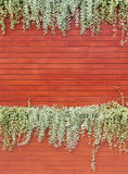Orange woodden wall with foliage Stock Photo