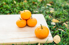 Orange on wooden board with grass outdoor. Orange on wooden texture board with grass outdoor stock photography